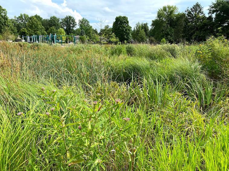 sharon meadows wetland creation